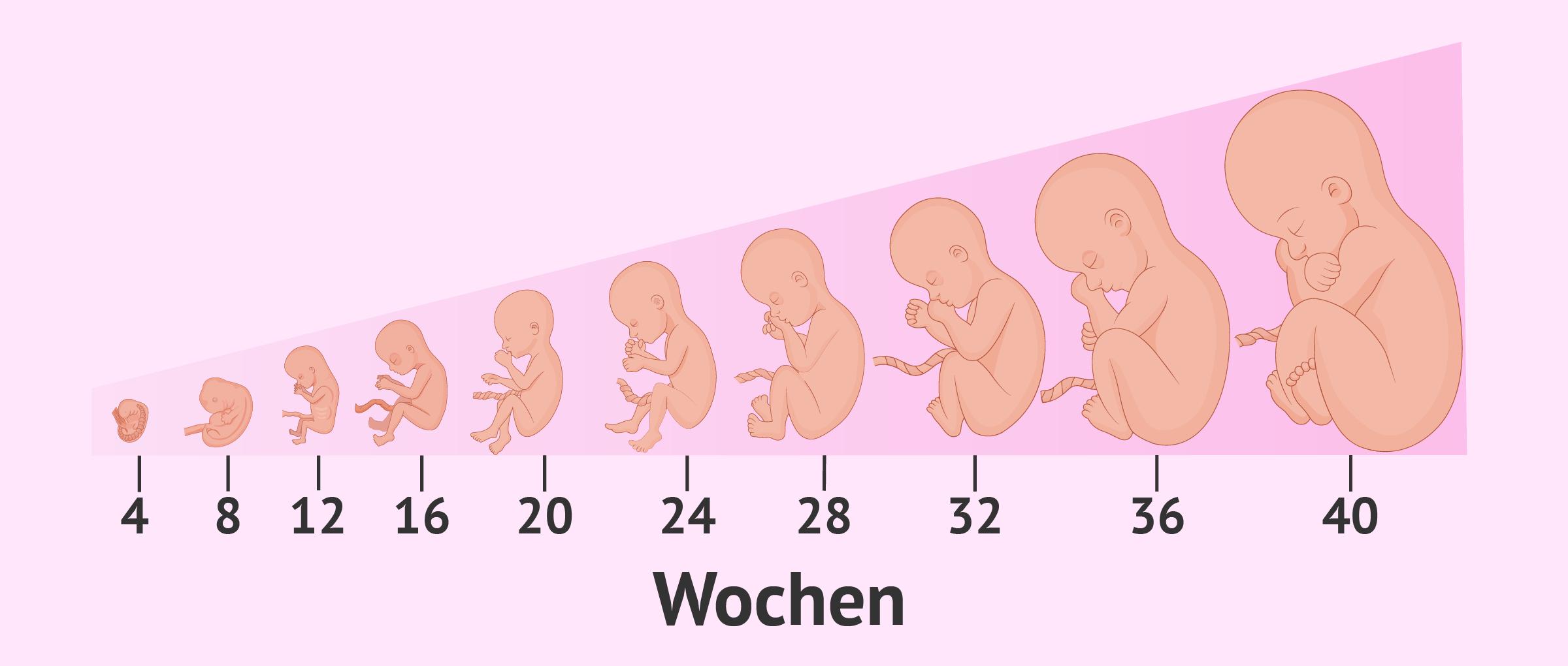 Die Schwangerschaft