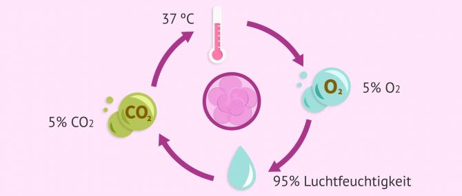 Imagen: Notwendige Bedingungen für die Kultivierung von Embryonen im Inkubator
