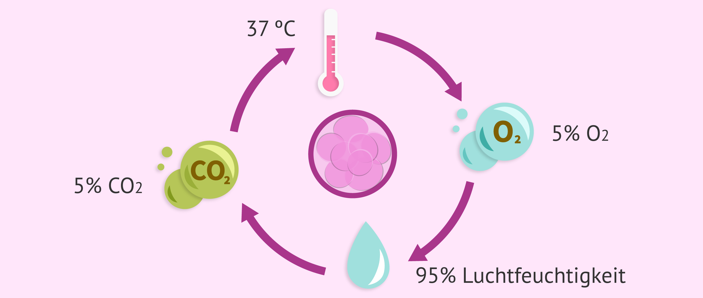 Die Embryokultur