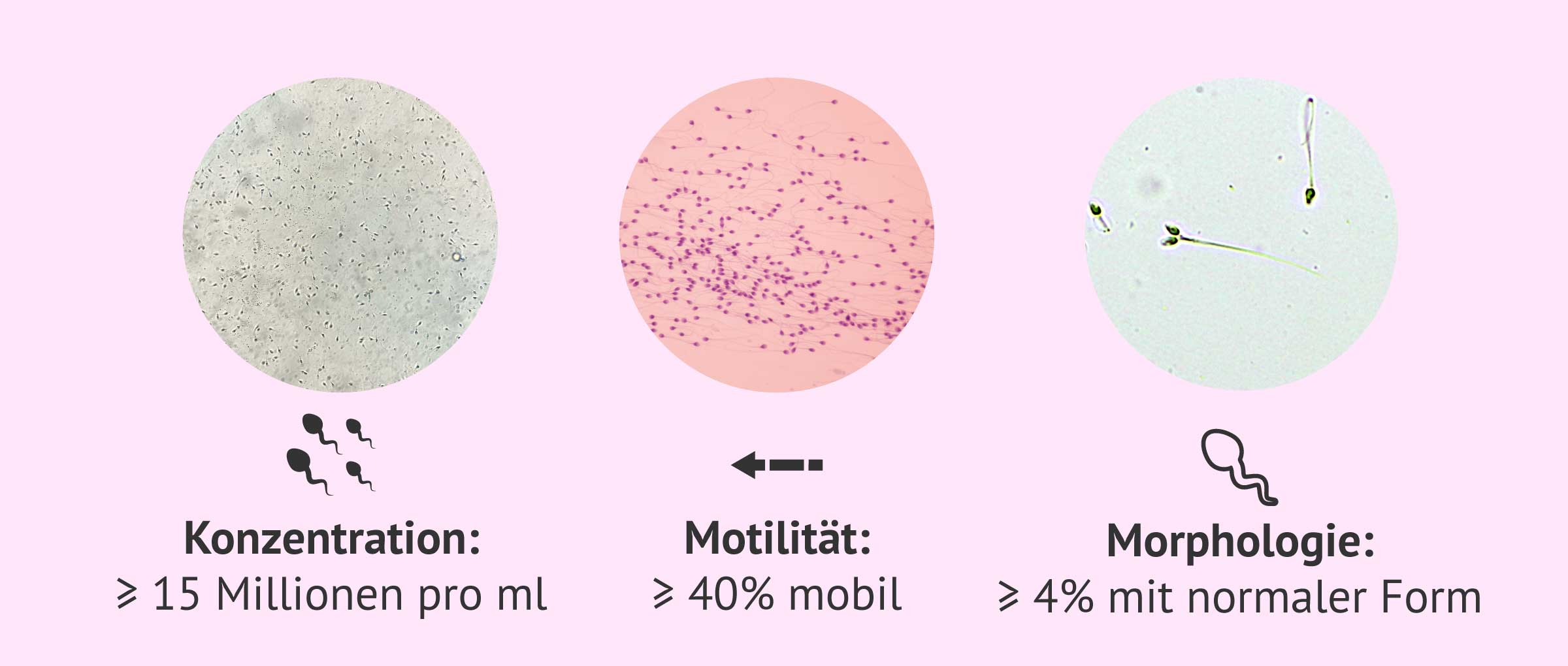 Mikroskopische Untersuchung des Samens