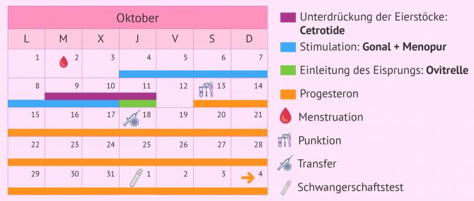 Imagen: Kalender für ein kurzes Stimulationsprotokoll