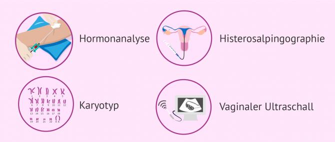Imagen: Studie zur weiblichen Fertilität