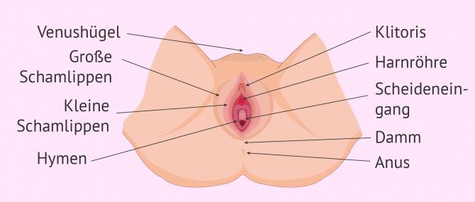 Imagen: Äußere weibliche Geschlechtsorgane bei Frauen