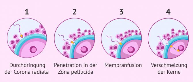 Ohne sperma schwanger Schwanger durch