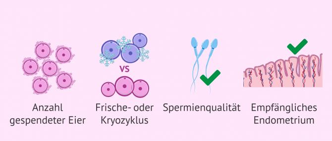 Imagen: Faktoren, die den Erfolg einer Eizellenspende beeinflussen
