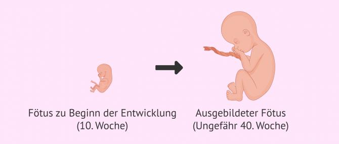 Imagen: Fötus Definition