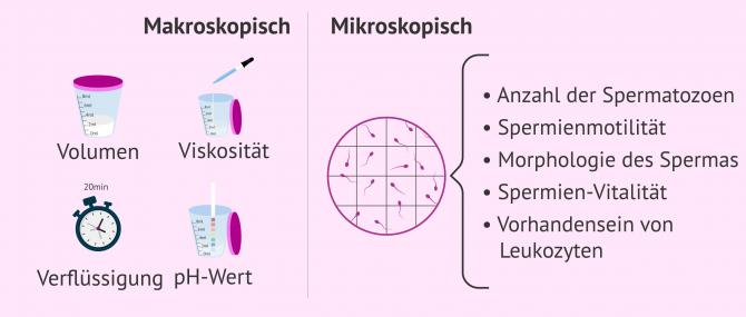 Imagen: Basis-Samenogramm mit makroskopischen und mikroskopischen Parametern