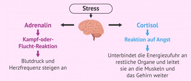 Imagen: Auswirkungen von Stress auf Körper