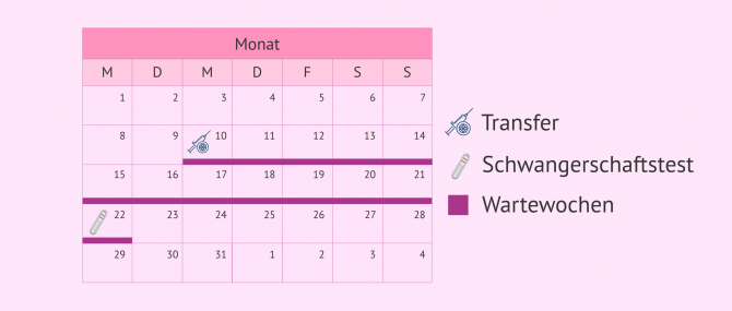 Imagen: Schwangerschaftstest nach IVF-ICSI