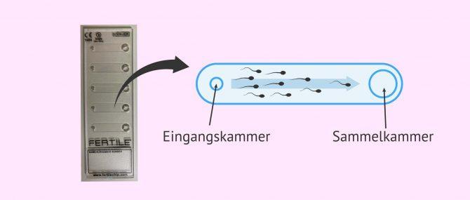 Imagen: Fertile Chip Technologie