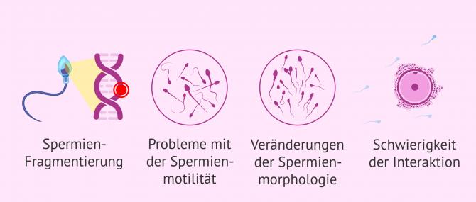 Imagen: Folgen von oxidativem Stress auf die Spermien