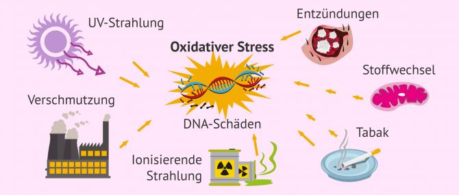 Imagen: Spermatozoen und oxidativer Stress